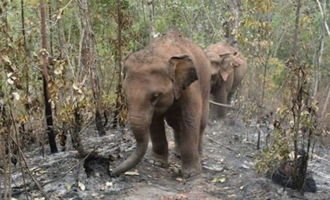 Escaped Elephants Leave A Trail of Destruction in China: Damage Goes to Million